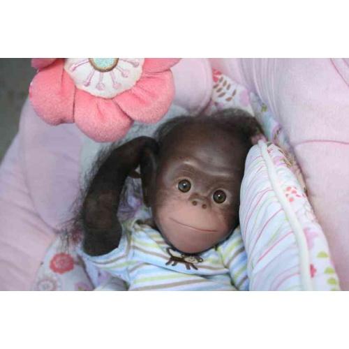 Chaz Baby Orangutans by Denise Pratt