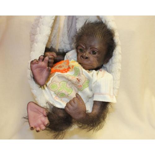 Kiwi Gorila de Denise Pratt